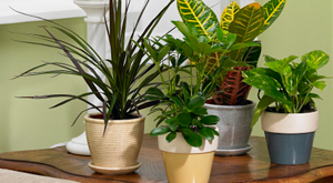 PHOTO: http://www.lowes.com/cd_Care+for+Houseplants_1269262554_
